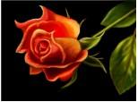 azi, am adaugat inca un trandafir in buchetul vietii