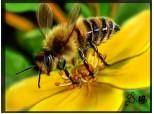 Bubu the Bee