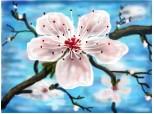 o floare de cires poate acoperi tot cerul....