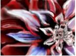 o floare...
