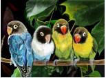 Seria 1.Parrots invasion