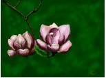 chestii roz