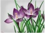 """...Doua flori...(oare puteau iesi mai rau de atat?-.-\"""")"""