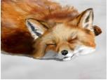 Foxy :3