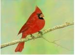 ...red cardinal...