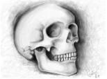 Studiu craniu..