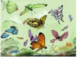 cine rupe aripile fluturilor...?