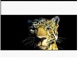 Lioness54