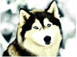Husky (Tiam promis castravetee ca e al tau) soo fa ce vrei cu el >:)