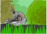 Papagalita meaa 2