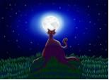 Pisica in noapte