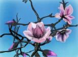 flori de magnolie...:D