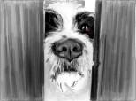 Doggy II