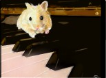 The Hamster's Raphsody No 6 in G Sharp Minor