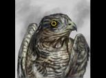 Young Hunter Hawk