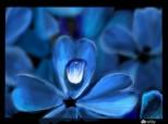 floare...