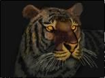 ...tiger...