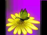 Inca o floricica...
