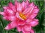 floare....sau ceva asemanator...