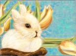 Cute baby bunny! Mustaciosul :))