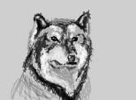 acelasi lup cu mici modificari