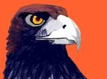 ...eagle...