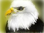 Un vultur