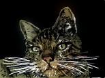 Desen 87568 continuat:pisica aristocrata