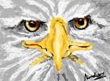 din nou acelashi vultur