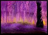 Purple_Romance