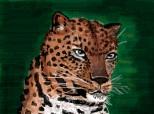 Desen 31837 modificat:aceeasi pisica stramba