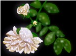 trandafir alb plouat